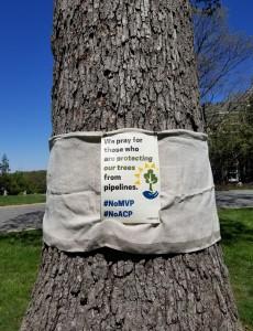 Pray4TreeProtectors Tree Sign Example